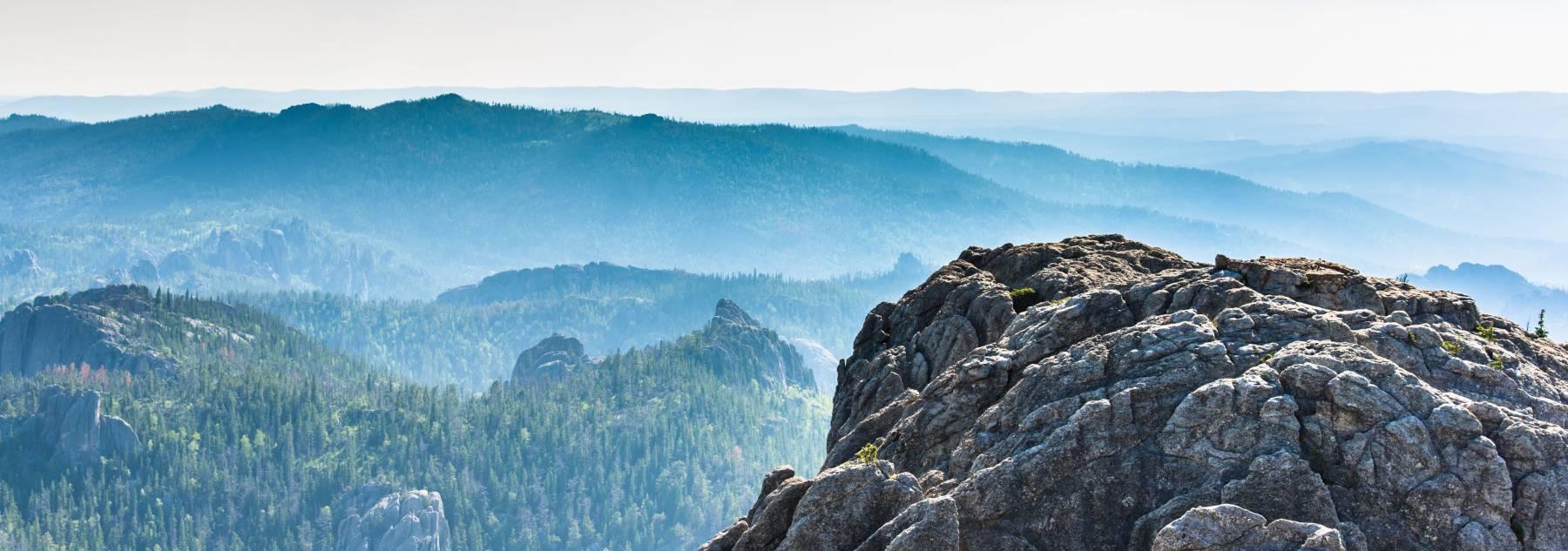 Landscape view of ponderosa pines in Black Hills National Forest